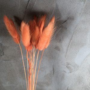 bunnytailsorange